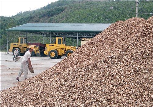 """Xuất khẩu dăm gỗ: Số 1 thế giới vẫn không """"quyết"""" nổi thị trường - 1"""