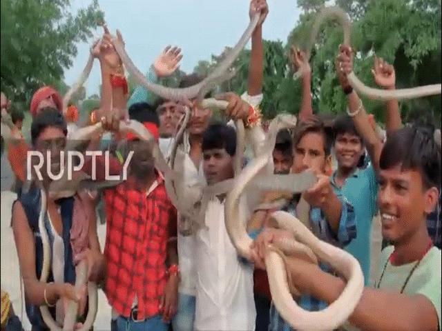 Xem người dân Ấn Độ tay không cầm hàng trăm con rắn độc diễu phố