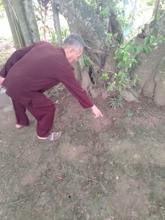 """Chuyện lạ về cây đa cổ thụ có 3 gốc """"độc"""" cạnh đền thờ vua - 3"""