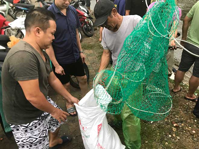 Người dân Hà Nội buông cần, giăng lưới bắt cá sau bão số 3 - 5