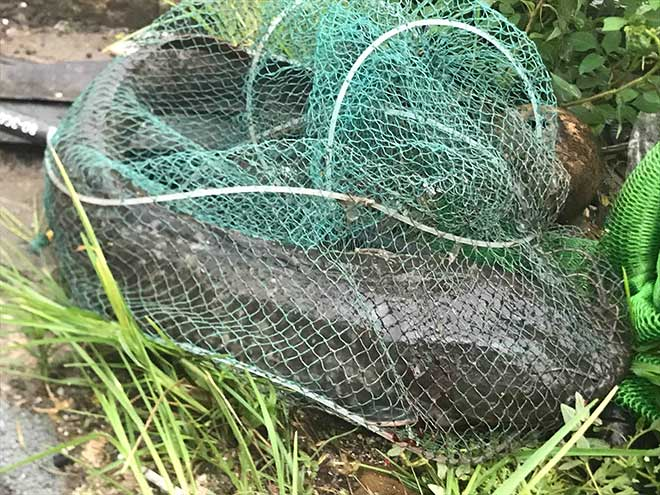 Người dân Hà Nội buông cần, giăng lưới bắt cá sau bão số 3 - 6