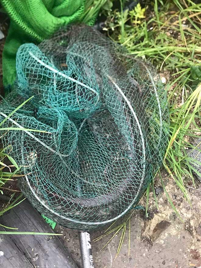 Người dân Hà Nội buông cần, giăng lưới bắt cá sau bão số 3 - 7