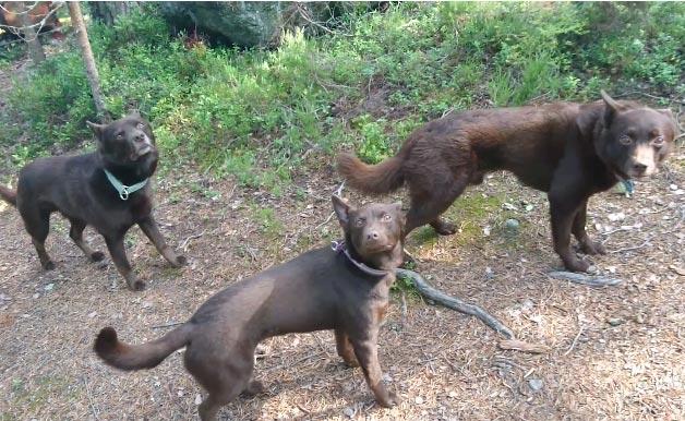 """Gần 1 triệu người háo hức xem đoạn video 3 chú chó đen """"đóng băng"""" - hình ảnh 1"""