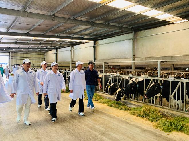 Vinamilk phối hợp với Cục Thú y xây dựng vùng chăn nuôi bò sữa an toàn dịch bệnh - 4