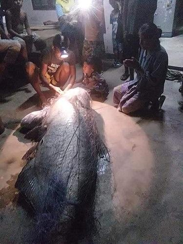 Ngư dân Thái Lan bắt được cá nheo khổng lồ đã 'thành tinh' - 4