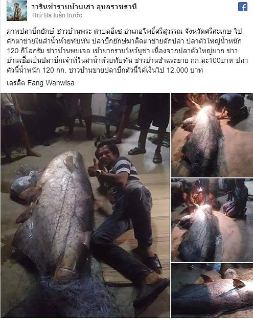 Ngư dân Thái Lan bắt được cá nheo khổng lồ đã 'thành tinh' - 1