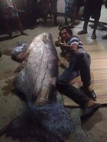Ngư dân Thái Lan bắt được cá nheo khổng lồ đã 'thành tinh' - 2