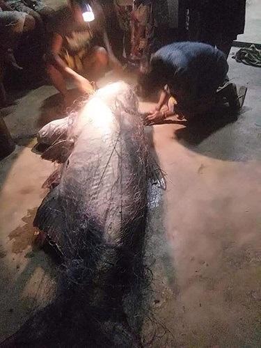 Ngư dân Thái Lan bắt được cá nheo khổng lồ đã 'thành tinh' - 5