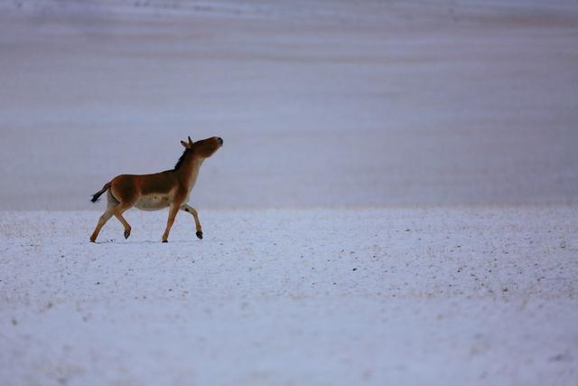 Về nơi con người không thể sống nhưng động vật hoang dã lại phát triển mạnh - 3