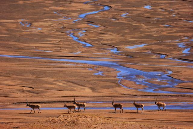 Về nơi con người không thể sống nhưng động vật hoang dã lại phát triển mạnh - 6