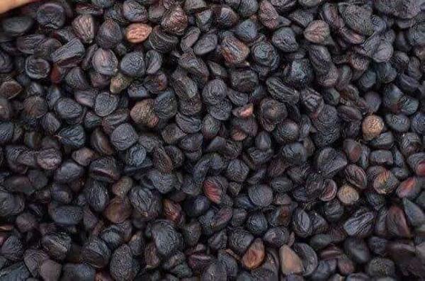 """Từ loại hạt có thể xin – cho thoải mái, nay có giá bán """"đắt như vàng"""" - 1"""