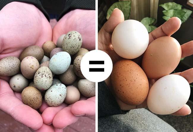 11 quan niệm sai lầm khi ăn trứng gà ai cũng mắc phải - 10