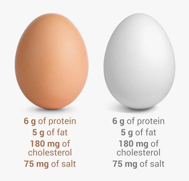 11 quan niệm sai lầm khi ăn trứng gà ai cũng mắc phải - 5