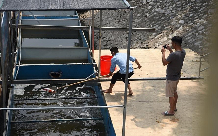 Cá Koi Nhật chết ở sông Tô Lịch: Mời chuyên gia thủy sản vào cuộc - 2