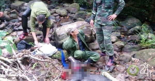 Truy tìm nhóm người giết thịt sơn dương quý hiếm trong vườn quốc gia - Tin tức 24h