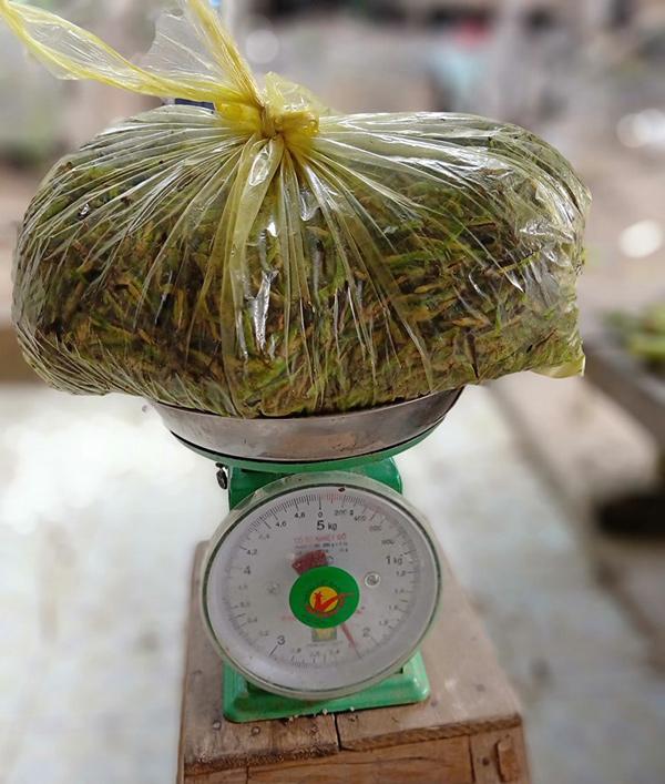 """Người Việt giăng lưới bắt """"tôm bay"""", mỗi ngày thu về cả triệu đồng - 4"""
