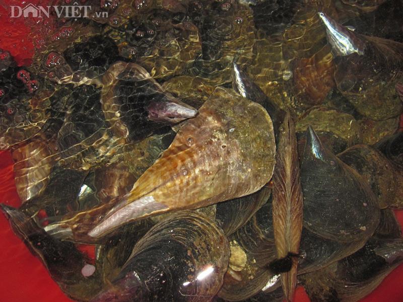 Top 10 đặc sản hải sản ngon nhất đất Việt được sách Kỷ lục ghi nhận - 18