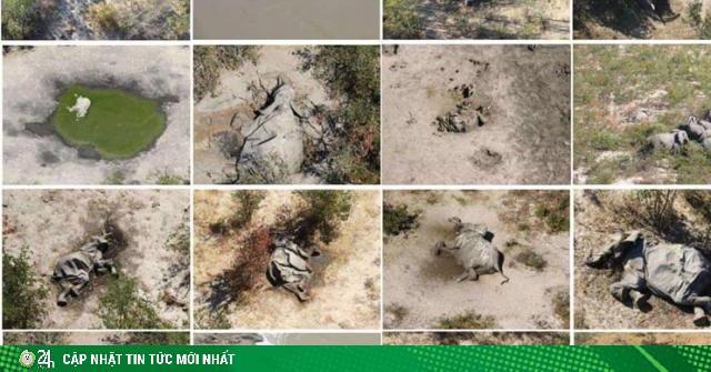 Bí ẩn đằng sau cái chết đồng loạt của hàng trăm con voi tại quốc gia châu Phi