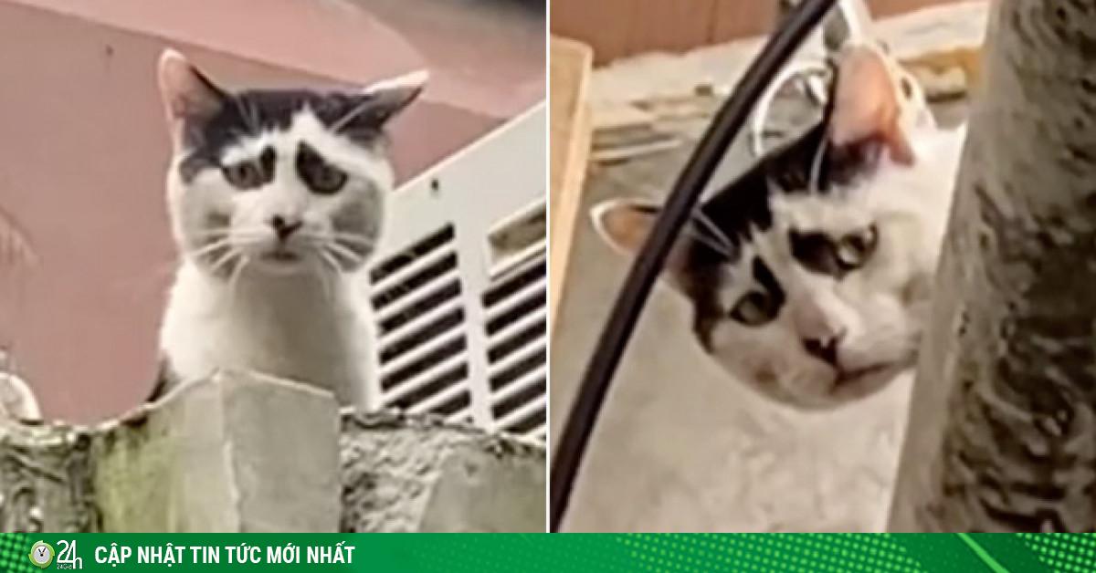 Video: Mèo hoang nổi tiếng vì có gương mặt khắc khổ đến khó tả