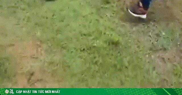 Video: Hổ mang chúa khổng lồ hung hãn chống trả 4 người đàn ông