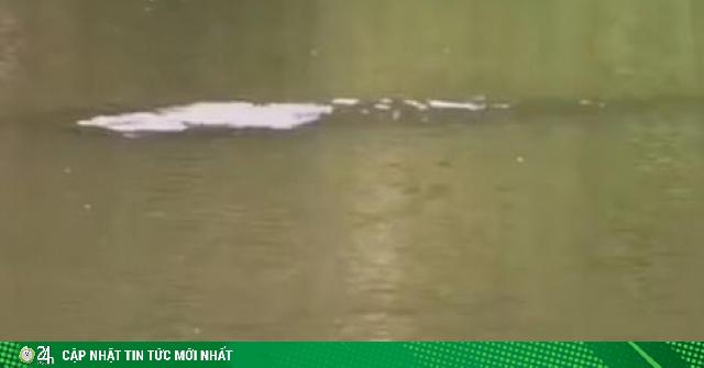 TQ: Hình ảnh thủy quái xuất hiện giữa mùa lũ khiến người dân hoang mang