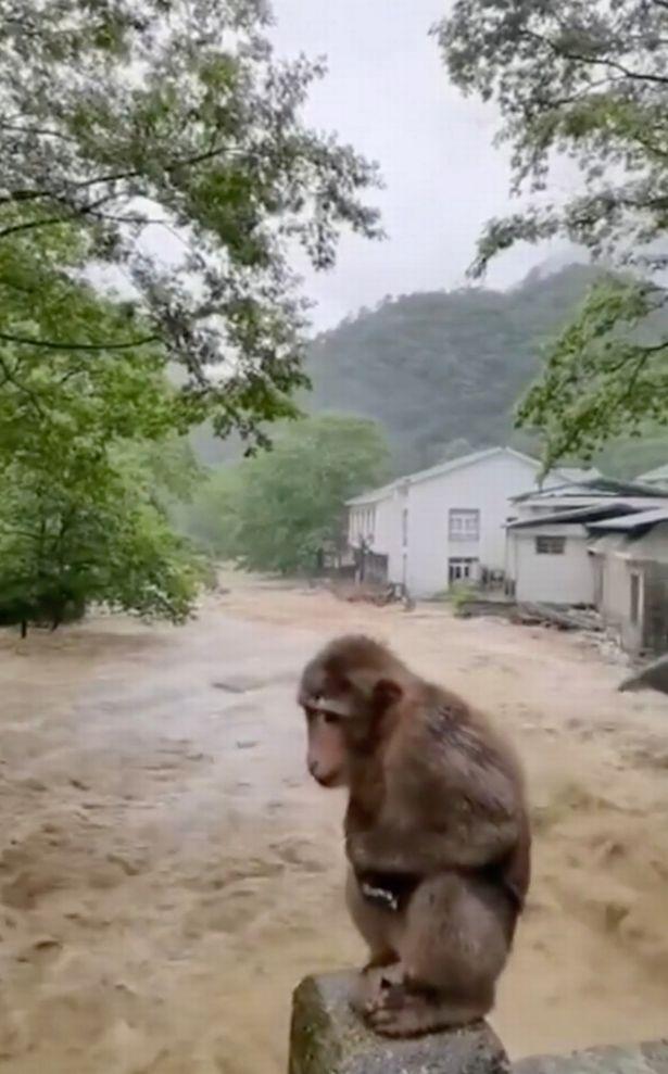 Video: Con khỉ đứng giữa dòng nước lũ chảy xiết gây hoang mang ở Trung Quốc - 1