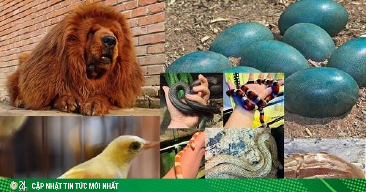 Những loài vật đắt đỏ, giá từ vài chục triệu đến hàng chục tỷ đồng
