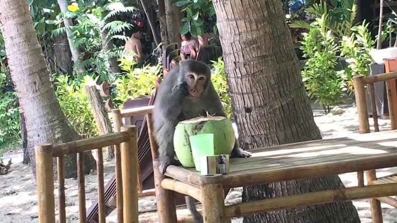 Bảo vệ hệ sinh thái tại Cù Lao Chàm - 3