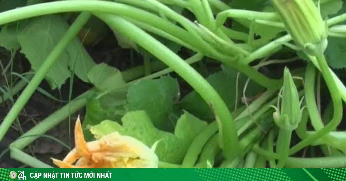 Trồng thử hạt giống bí ẩn từ Trung Quốc: Cây mọc điên loạn