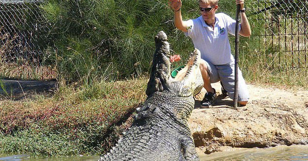 Cá sấu khổng lồ nổi tiếng nhất thế giới qua đời ở tuổi 100 - 2