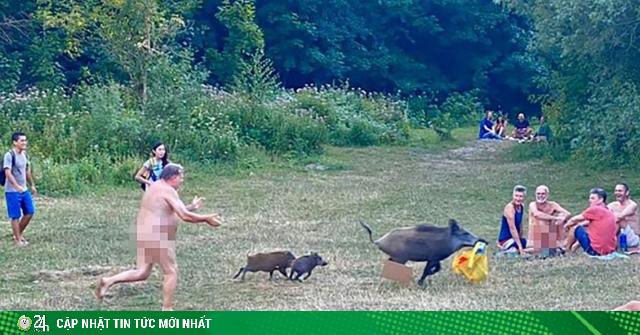 Lợn rừng trộm laptop chạy như bay, người đàn ông khỏa thân đuổi bắt và cái kết