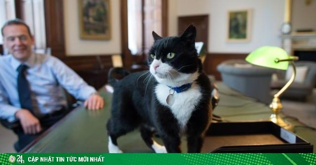 Mèo làm quan ở nước Anh chính thức được nghỉ hưu