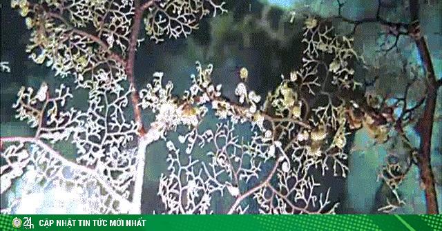 Sinh vật siêu kỳ quái với hàng ngàn xúc tu bắt và ăn thịt con mồi trong chớp mắt
