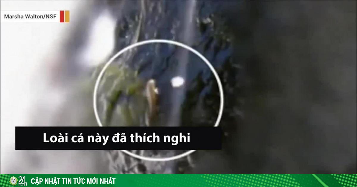Video: Tròn mắt xem kỹ năng thần sầu của loài cá bám đá, vượt thác cao hàng chục mét