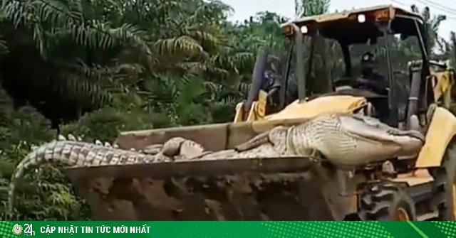 Cá sấu ma quỷ nặng nửa tấn ám ảnh dân làng, sợ đến nỗi chôn đầu một nơi xác một nẻo