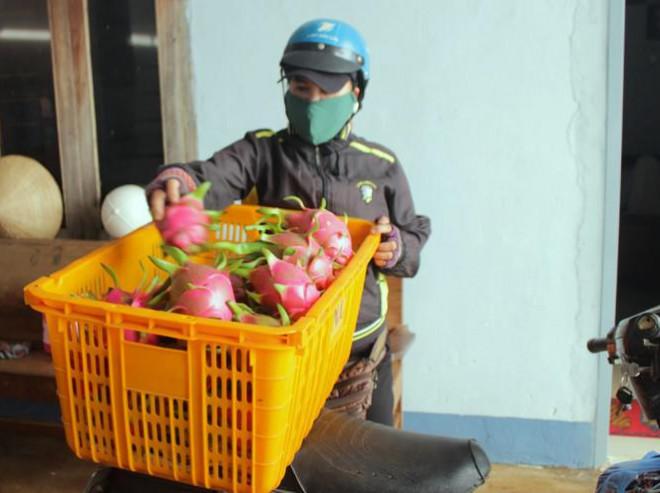 Nông dân Đắk Lắk điêu đứng vì thanh long rớt giá còn 2.000 đồng/kg - 2