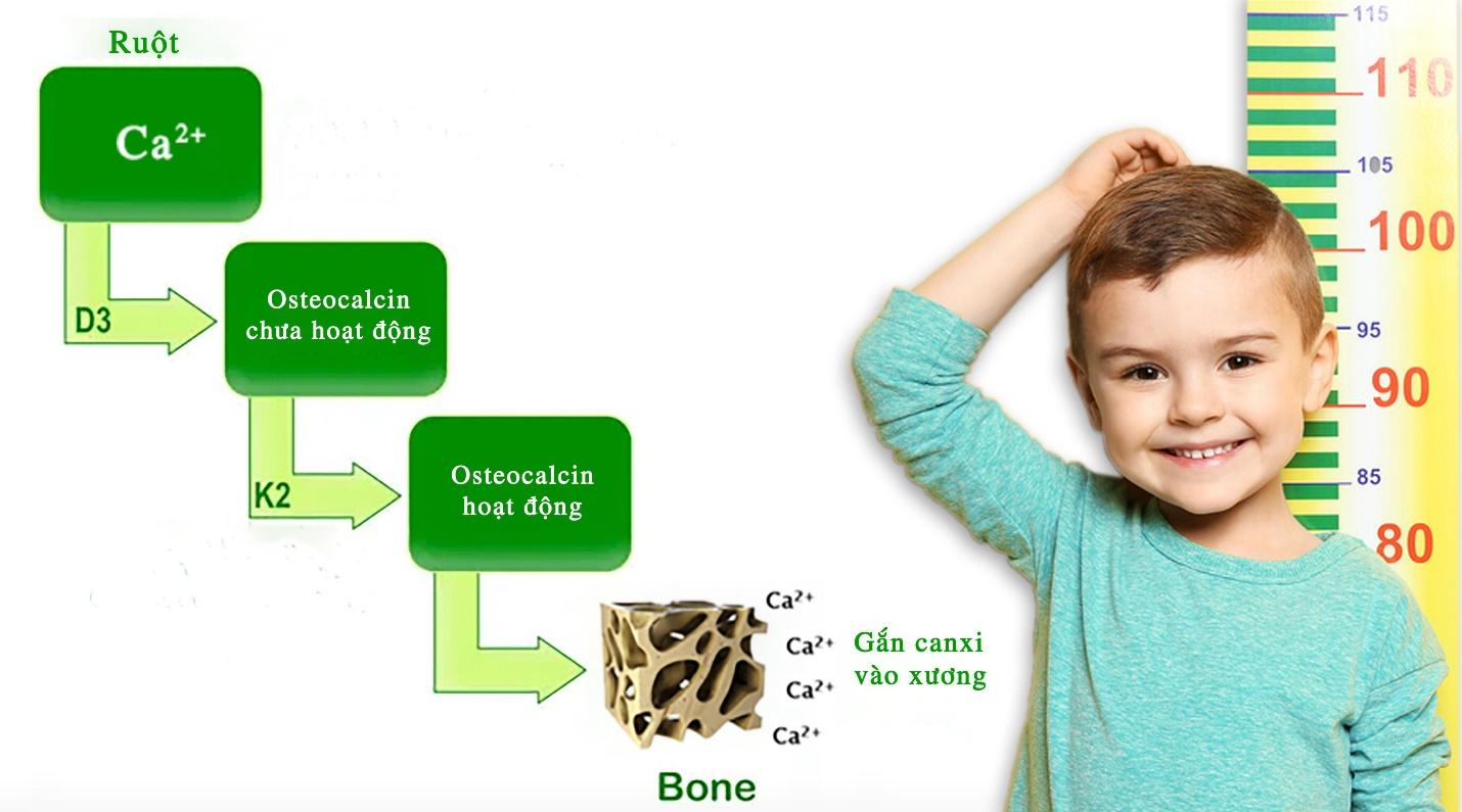 """4 lý do khiến vitamin K2 MK7 trở thành vi chất """"thông minh"""" nhất giúp trẻ đột phá chiều cao - 3"""