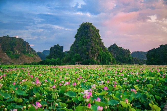 """Ngỡ ngàng hồ sen nở rộ giữa Thu ở Hang Múa (Ninh Bình), giới trẻ tha hồ chụp ảnh """"sống ảo"""" - 2"""