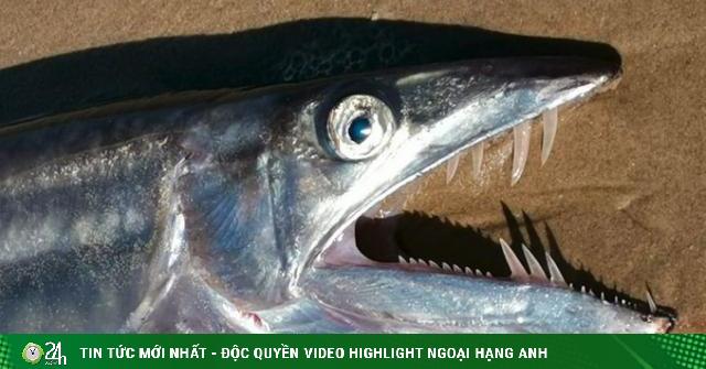 Quái vật biển sâu với hàm răng sắc nhọn trôi dạt bờ gây hãi hùng