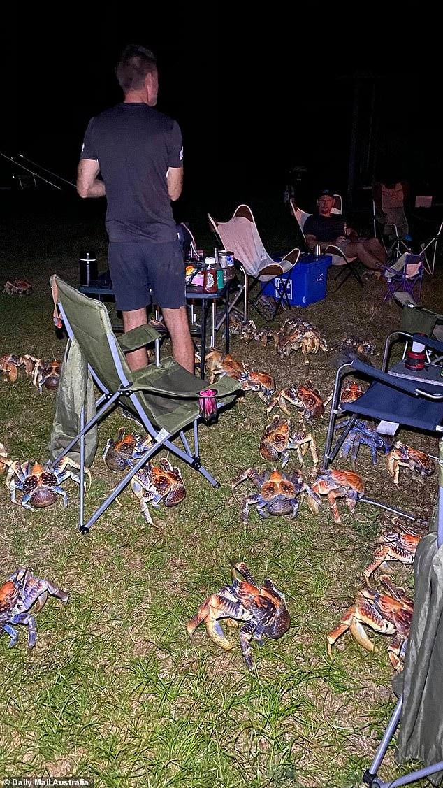 """Video: Đàn cua khổng lồ """"bao vây"""" gia đình cắm trại trên đảo - 1"""