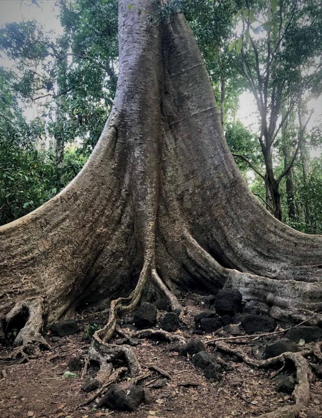 """Những """"báu vật"""" vô giá khiến thế giới ngỡ ngàng ở vườn Quốc gia Cát Tiên - 6"""