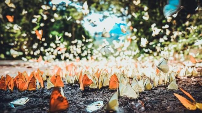 """Những """"báu vật"""" vô giá khiến thế giới ngỡ ngàng ở vườn Quốc gia Cát Tiên - 8"""