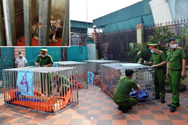 Ai chi trả 600 triệu/tháng để nuôi 9 con hổ ở Nghệ An? - 1
