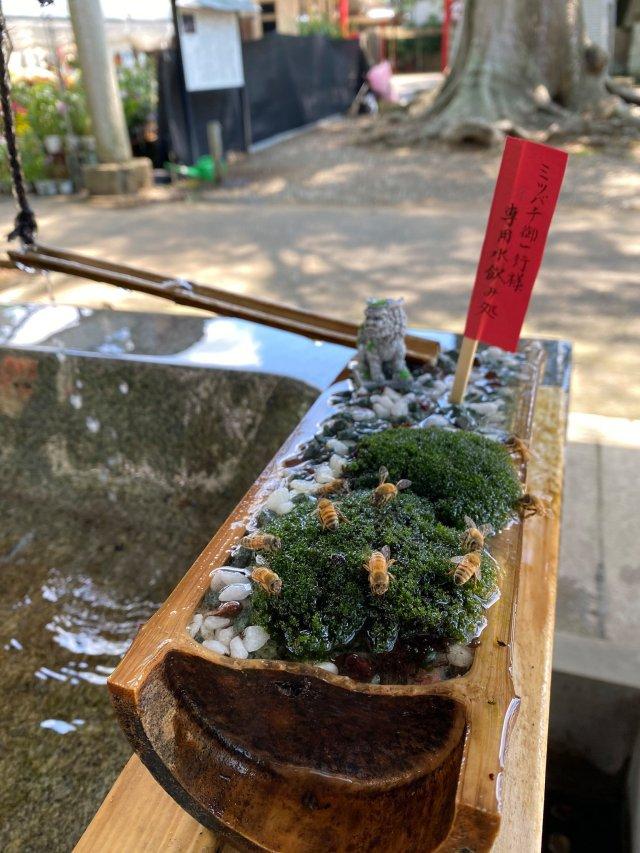 japanese shrine bees water drink honey hitokotonushi ibaraki cute sweet kind heartwarming japan story news photos 1 1631268050 337 width640height853 10 địa điểm du lịch độc đáo nhất thế giới, mê mẩn ngay từ cái nhìn đầu tiên