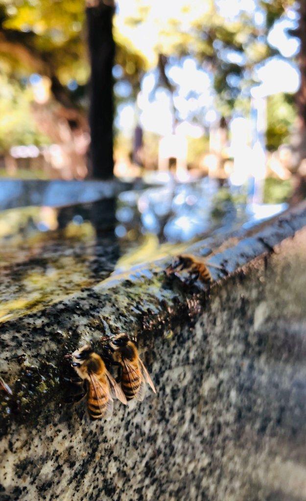 japanese shrine bees water drink honey hitokotonushi ibaraki cute sweet kind heartwarming japan story news photos 12 1631268029 663 width625height1024 10 địa điểm du lịch độc đáo nhất thế giới, mê mẩn ngay từ cái nhìn đầu tiên