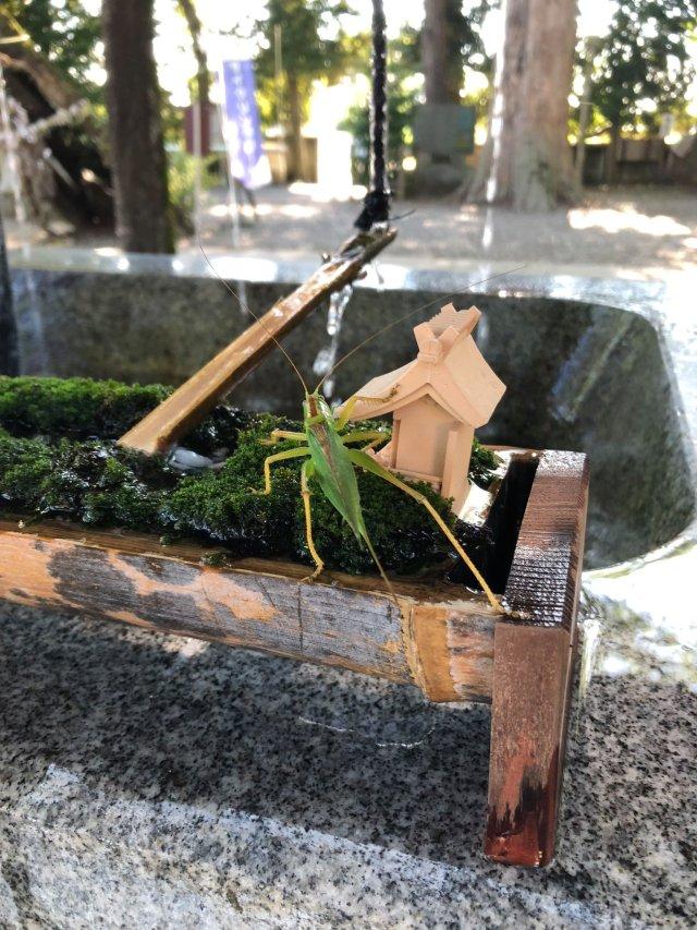 japanese shrine bees water drink honey hitokotonushi ibaraki cute sweet kind heartwarming japan story news photos 5 1631268121 518 width640height853 10 địa điểm du lịch độc đáo nhất thế giới, mê mẩn ngay từ cái nhìn đầu tiên
