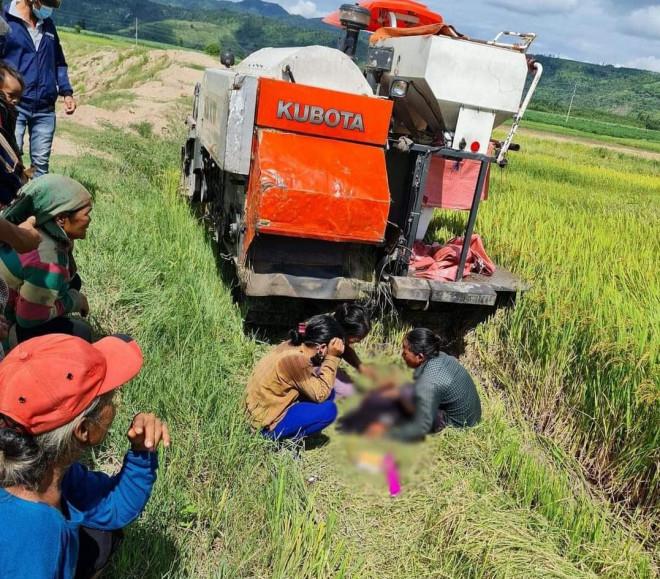 Bé trai 8 tuổi bị máy gặt lúa tông tử vong khi đang bắt chuột - 1