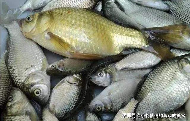 4 loại cá bà nội trợ đảm đang chỉ cần nhìn qua cũng không mua - 3