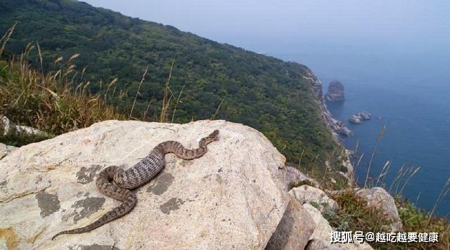 Rợn người với hòn đảo có gần 20,000 con rắn độc trong 1km2 - 3