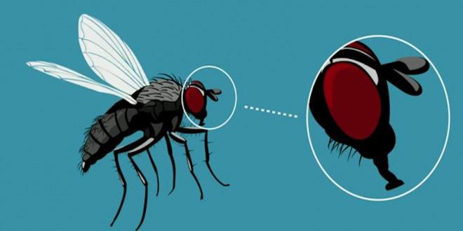 Điều hãi hùng mà bạn có thể gặp phải khi lỡ ăn thức ăn bị ruồi đậu lên - 2